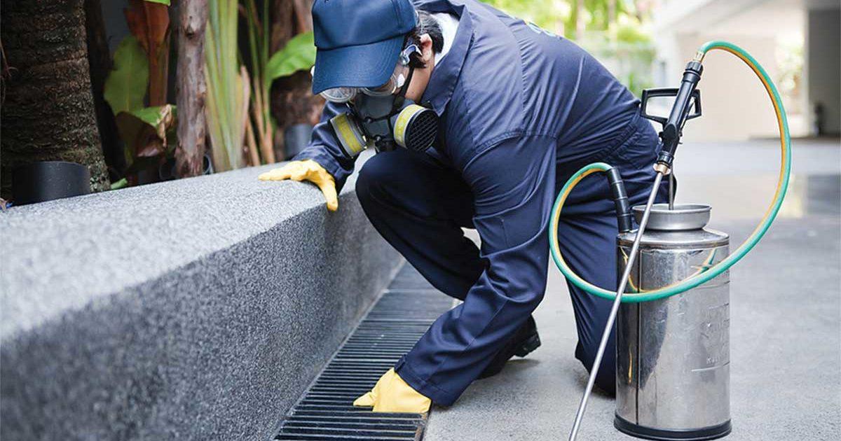 Bird Pest Control- An Appropriate Pest Prevention Measure